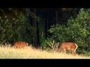 Wild Russia - 6 - Caucasus (Россия: От Края До Края - Кавказ) - 2/3