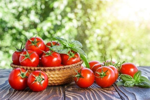 Конец февраля это время для посадки высокорослых и позднеспелых томатов.