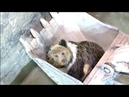 Brown bear rescued from hydropower station in northwest China