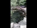 озеро в Воронцовском парке посто сказочный
