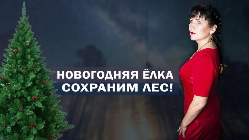 Новогодняя ёлка: НЕ РУБИ! Сохраним лес! Защита природы. Алла Громова