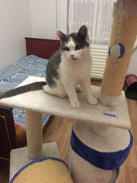 Барни. Котёнок-подросток с мягким, ласковым характером. Ему