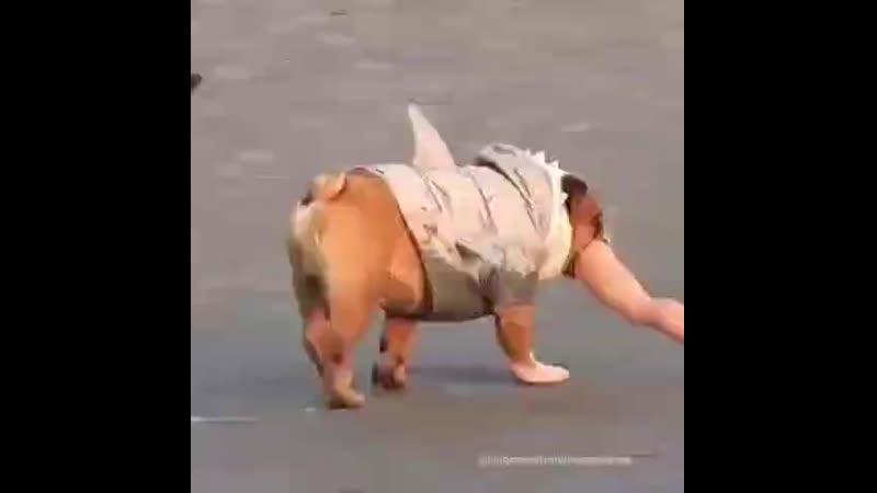 Голодный пёс