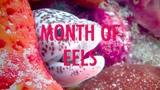 Month of Eels