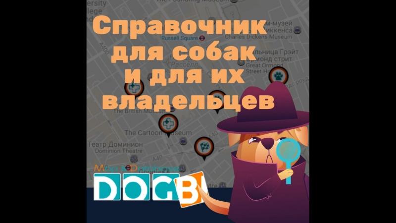 DOGBI - кинологический портал