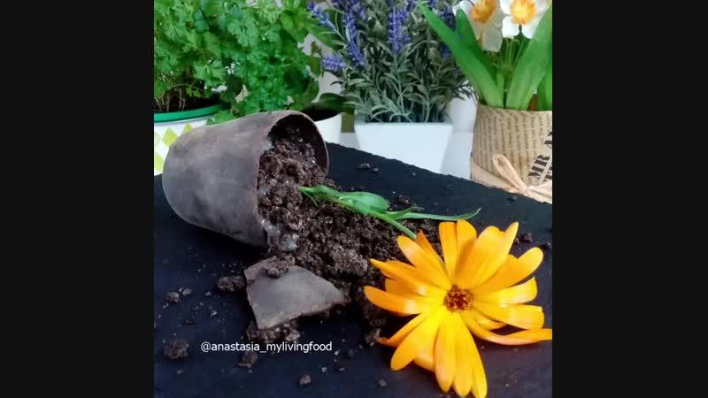 Моя raw-версия десерта «Мамин любимый цветок»