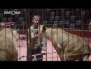 В Казань приехал единственный в мире дрессировщик львов, выступающий на протезах