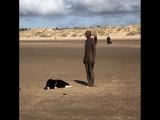 Собака пытается играть со статуей