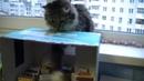 Приколы с котами Играем с кошкой Кусачкой · coub, коуб