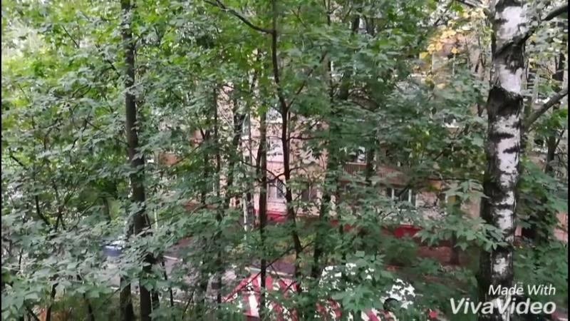 Дерево в спокойном состоянии около дома но в ненастье способное бить по балкону и прогибаться в сторону окна