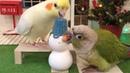 Parrots building snowman