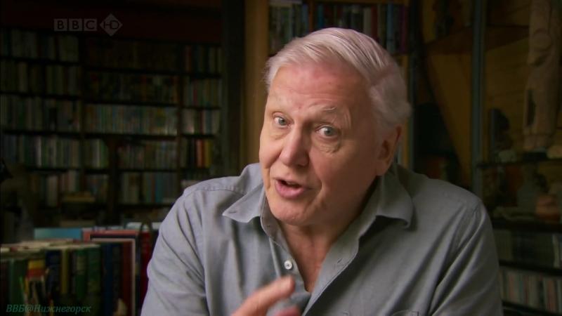 BBC Чарльз Дарвин и Древо жизни Научно познавательный природа исследования эволюция 2009