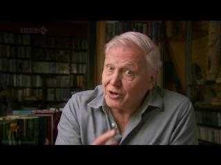 BBC Чарльз Дарвин и Древо жизни (Научно-познавательный, природа, исследования, эволюция, 2009)