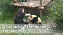 Qi Yi Asked The Nanny For Apples iPanda