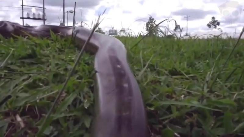 Ужасы Амазонии 11 Страшных Cуществ Амазонки