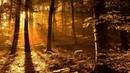 Пробуждение утреннего леса Рассвет Звуки природы Пение птиц