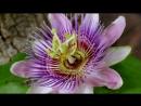 Cvety raspuskayutsya