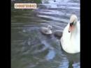 Video ddc47a60b0cbef46a7f5373f61293dd1