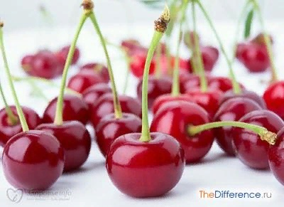 Разница между вишней и черешней Ни у кого не вызывает сомнений то, что вишня и черешня крайне полезны. Они обладают противовоспалительными и антисептическими свойствами, являются природным