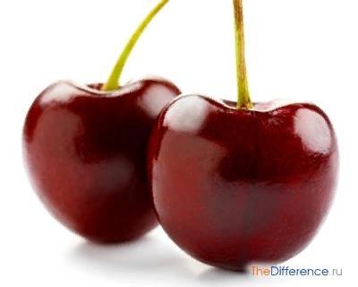 Разница между вишней и черешней