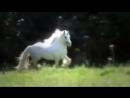 ҉ Видео про лошадей Песня из рекламы Bon Aqua