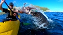 Brutal Octopus slap by a seal caught on GoPro HERO7BLACK in NZ Kaikoura (short story)