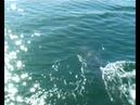 Dolphin Football dolphins toss jellyfish sky high