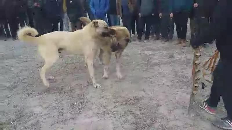 Konya Mermi vs Ankara Küllü