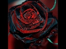 Песня Черная Роза Эмблема Печали