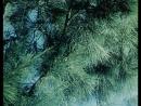 Los árboles de Buenos Aires Leopoldo Torre Nilsson 1957