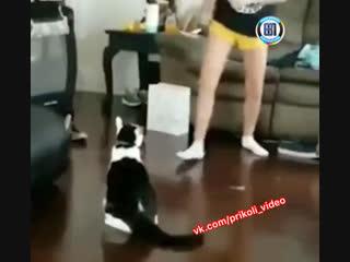 Зря она к котику приставала