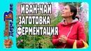 ИВАН-ЧАЙ, КОПОРСКИЙ ЧАЙ, заготовка, приготовление,ферметация/ЖИЗНЬ В ДЕРЕВНЕ
