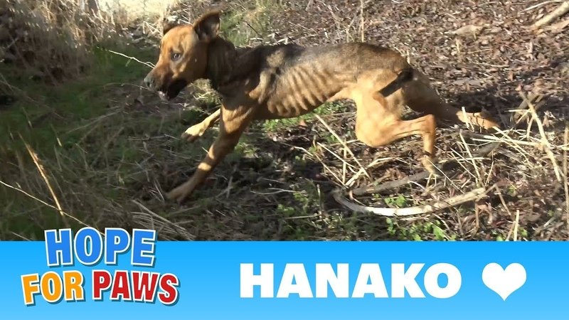 A starving dog living by the freeway made it really hard for us to save her life Please share