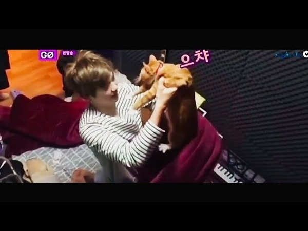 Kang Daniel sweet cuts with cats Rooney and Peter in Wanna One Go 2 (Zero Base) Ep. 2🍑