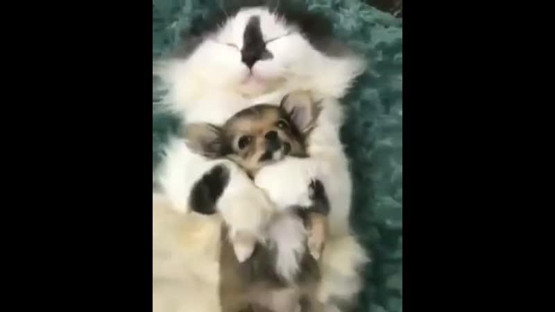 - Дядя Вася,а правда что собаки когда то были большими и котов гоняли - - Да сказки это,спи давай!
