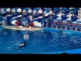 Дельфинарий в сочинской