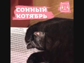 Подбородок сонного котика