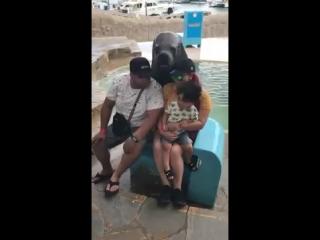 Морской лев фотографируется и корчит гримасы