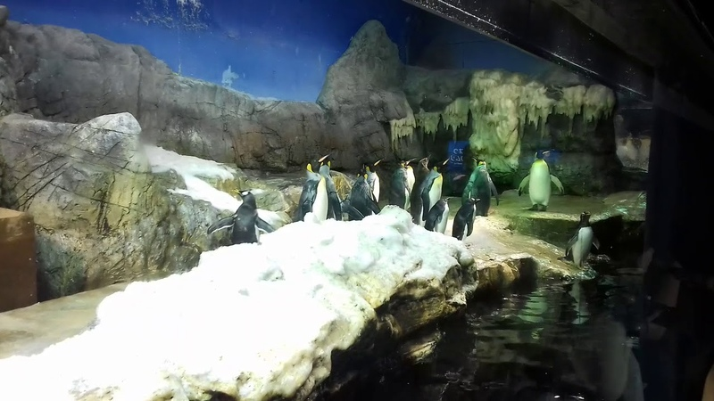 Пингвины а Японии. Океанариум Кайюкан, Осака.