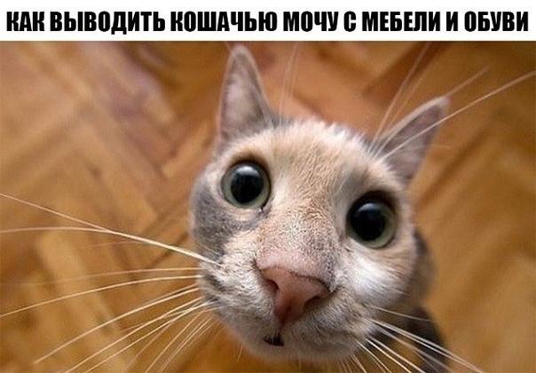 Как выводить кошачью мочу с мебели и обуви