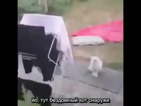 Страшный кот (субтитры)