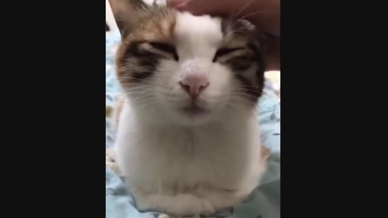 Обычная котовья магия