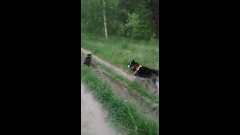 Липстар Жером на прогулке с другом Оля спасибо за видео