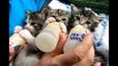Tingkah Lucu Anak Kucing Saat Minum Susu Botol Ngedot