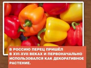 Здоровая еда. Болгарский перец