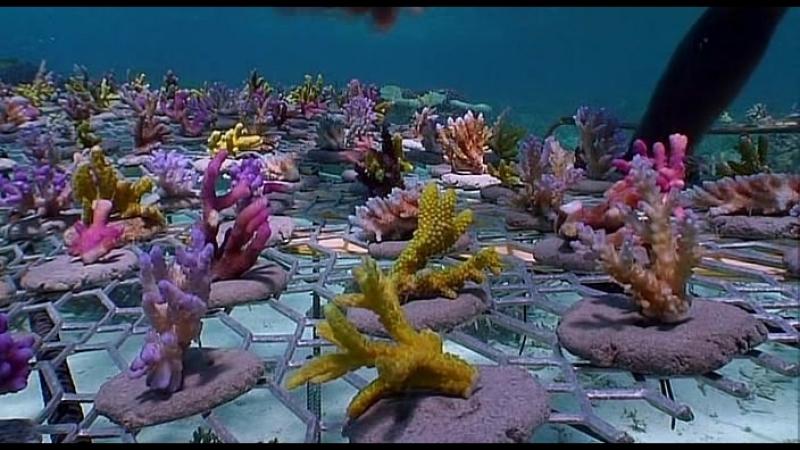 Тайны Тихого Океана - 6 часть