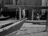 La pointe Courte - 1955 - Agnès Varda