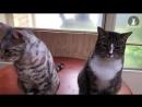 Кот сдал своего подельника.