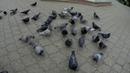 Петропавловск 2018 Кормление голубей
