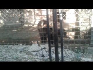 Медведь ебашит под Slipknot